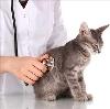Ветеринарные клиники в Верхнеднепровском